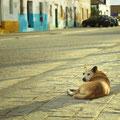perro callejero en Sancti Petri