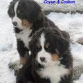 Cayun und Coskan warten auf ihren Einsatz