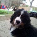 Dream comes true - Orson oder auch einfach Teddy - sucht noch seine Familie