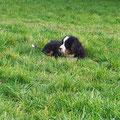 der sich gerne im Gras versteckt