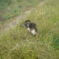Alea genießt das hohe Gras