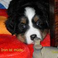 Iron macht schon fast die Augen zu