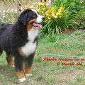 Charlie 8 Monate alt