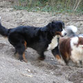 Lady in Action mit Gwen und Merlin