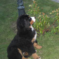Sunny mit 3,5 Monaten