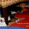 unser Lieblingsschlafplatz ist unter dem Stuhl