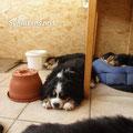 Cosmo schläft schon wie ein ganz Großer