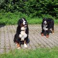Lady und Ariba im Garten