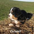 Coco gefällt es hier