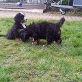 David & Teddy im großen Garten
