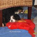 und dann... na was wohl! ab unter den Stuhl - Schlafen!