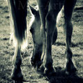 Fers à cheval (2010)