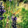 Papillon et lavande (2010)