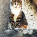 Le chat d'Alain (2017)