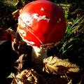 Red Mushroom (2010)