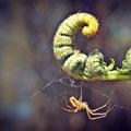 Mini Yellow Spider (2017)