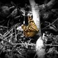 Golden butterfly (2010)