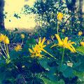 Fleurs jaunes sous-bois (2017)