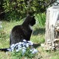 とどろき公園の猫