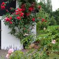 Landhausgarten I Sankt Augustin