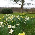Frühling Landhausgarten I Sankt Augustin