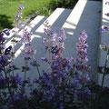 Hausgarten I Bad Honnef