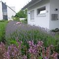 Moderner Vorgarten Einfamilienhaus I Bornheim-Rheinland
