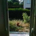 Blick aus Karlas Zimmer in den Garten