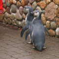 Pingus 3 Monate alt