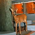 Dauerausstellung Wald