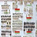 Käfersammlungskasten