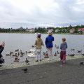 Stadtsee Tjörnin