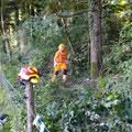 Zurückschneiden des Waldrandes bei der Weihnachtsbaumanlage Steinbrunnen