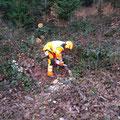 Pia beim Zersägen von Sturmholz