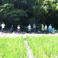 2014年7月27日、上山口寺前谷戸復元プロジェクト、7月定例作業