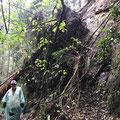 10月3日 二子山山系巡視プロジェクト