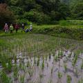 2014年6月22日、上山口寺前谷戸復元プロジェクト、6月定例作業