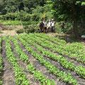 8月15日 農園管理プロジェクト