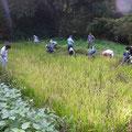 161023上山口寺前谷戸復元プロジェクト