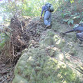 9月17日 二子山山系巡視プロジェクト