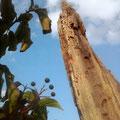 Die Skyline der Lobau - Eine wunderbare Perspektive einer Teilnehmerin vom Krea(k)tiv-Workshop Perspektivenwechsel: Claudia F.