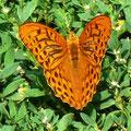 (c) Heike Linamayer - Schmetterling oder die Leichtigkeit des Seins