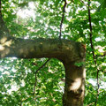 Auch in der Natur sind rechte Winkel beliebt oder wollte der Ast einfach seine Perspektive wechseln? ;-)