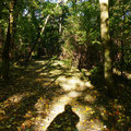 Schatten im Herbst