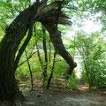 Das Baumtor ist einer der Seminarräume von Walking and Talking ;-)