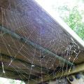 Eine seltene Perspektive: Von unten auf die Tischplatte schauen - Ein wunderschönes Spinnennetz hat sich offenbart.