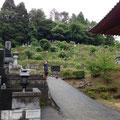 清水寺墓地斜面が綺麗になりました。