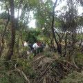 津の宮地区 高台移転候補地測量の為の桑林の葦草刈開墾作業