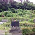 草に埋もれていた墓石が見えるようになりました