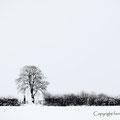 Tree & hedges
